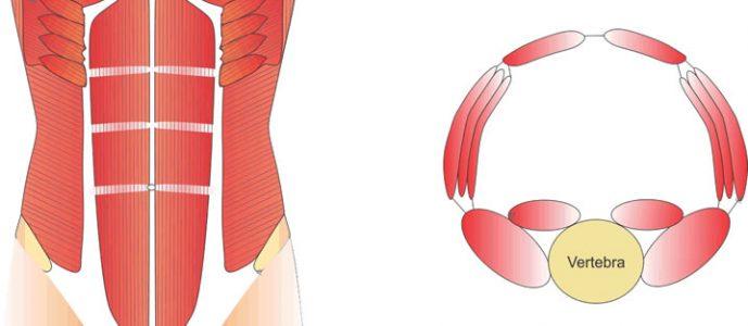 , La reconstrucción de la pared abdominal